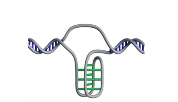 Новый тип ДНК