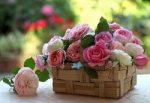 цветы в карзине